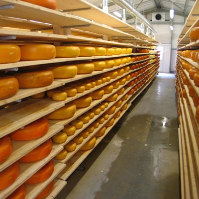 all the Cornish Gouda you can eat ...